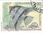 Sellos de Europa - Bulgaria -  pez-Pterophyllum eimekei
