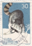 Stamps Cuba -  mapache