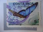 Sellos de America - Costa Rica -  Morpho peleides.
