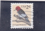 Stamps United States -  ave- pajaro carpintero