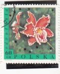 Stamps Poland -  flores- odontonia