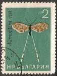 Sellos de Europa - Bulgaria -  Nemoptera coa