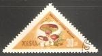 Stamps Poland -  Boletus Luteus