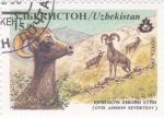 Stamps Uzbekistan -  CARNERO SALVAJE