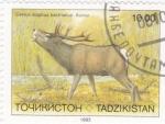 Stamps Tajikistan -  CIERVO
