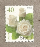 Stamps Europe - Serbia -  Rosa