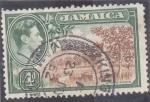 Stamps Jamaica -  arboles cítricos
