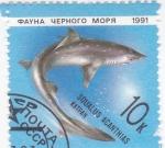 Sellos de Europa - Rusia -  Fauna marina- escualido