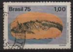 de America - Brasil -  PECES  PETRIFICADOS