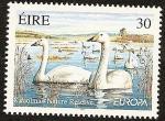 Sellos de Europa - Irlanda -  EUROPA - Aves - Cisne Cantor - Kilcoolman reserva natural