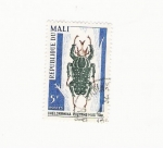 Stamps Africa - Mali -  CHELORRHINA POLYPHEMUS F. A. B.