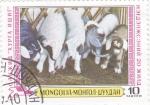 Sellos de Asia - Mongolia -  ganaderia