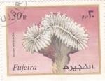Sellos de Asia - Emiratos Árabes Unidos -  CORAL-MUSSA ANGULOSA