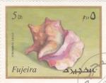 Stamps : Asia : United_Arab_Emirates :  CARACOL MARINO-STROMBUS GIGAS
