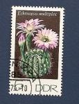 Stamps Germany -  Flor de cactus - Echinopsis