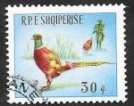 de Europa - Albania -  811 - Caza del faisan