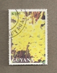 Stamps America - Guyana -  Flores