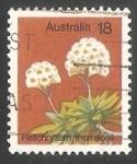 Sellos de Oceania - Australia -  Familia del Girasol