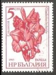 Sellos de Europa - Bulgaria -  Gladiolo