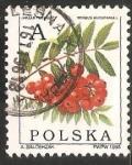 Sellos de Europa - Polonia -  azarollo