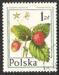 Stamps Poland -  frutas del bosque