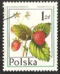 Sellos de Europa - Polonia -  frutas del bosque