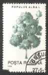 Stamps Poland -  Alamo blanco