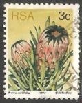 Sellos de Africa - Sudáfrica -  Protea neriifolia
