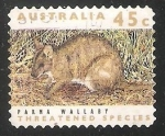Sellos de Oceania - Australia -  Parma Wallaby