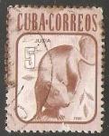 Sellos de America - Cuba -  Jutia