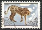 Sellos del Mundo : Europa : Hungría : Gepard-guepardo