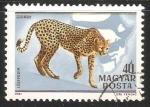 Sellos de Europa - Hungría -  Gepard-guepardo