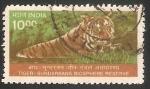 Sellos de Asia - India -  Tigre