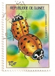 Stamps Africa - Guinea -  Insectos. Mariquitas.