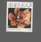 Sellos del Mundo : America : Venezuela :  FLOR