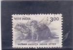 Sellos de Asia - India -  MUSTELIDOS-OTTER
