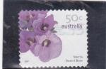 Sellos de Oceania - Australia -  F L O R E S- ROSA DEL DESIERTO