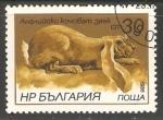 Sellos de Europa - Bulgaria -  conejo común
