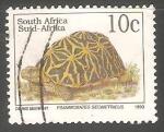 Sellos de Africa - Sudáfrica -  Psammobates Geometricus
