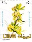Sellos de Asia - Líbano -  FLORES- VINETTE DEL LIBANO