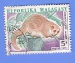 Stamps Europe - Madagascar -  CHEIRO GALEUS MAJOR