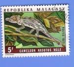 Stamps Africa - Madagascar -  CAMALEON NASUTUS MALE