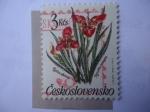 Stamps Czechoslovakia -  Figridia Pavonta - Orquidea -