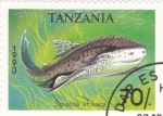 Sellos de Africa - Tanzania -  sguiatina africana