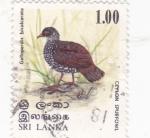 Stamps Sri Lanka -  A V E -