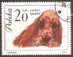 Stamps Poland -  Cocker-Spaniel