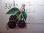 Stamps United States -  Flora - Mora.