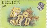 Stamps Belize -  FLOR DE CORAL