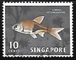 Stamps Singapore -  Rasbora heteromorpha