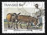 Sellos de Africa - Sudáfrica -  Comercial con burros